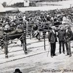 Truro Primestock Historic Cattle Show