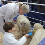 Truro-Primestock-Show-2018-Countess-of-Wessex-Children-Sheep-01