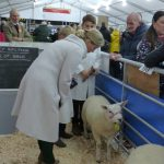 Truro-Primestock-Show-2018-Countess-of-Wessex-Children-Sheep-02