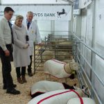 Truro-Primestock-Show-2018-Countess-of-Wessex-Sheep-04